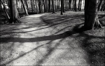aafc, 2005, Achterhoek, bos